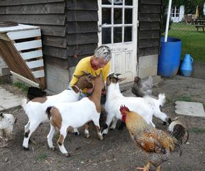 Des animaux de la ferme attachants