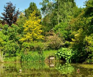 Au bord d'un étang dans l'arboretum de la Tuillière