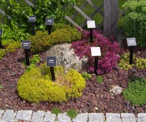 Plantes dans les jardins de Sothys