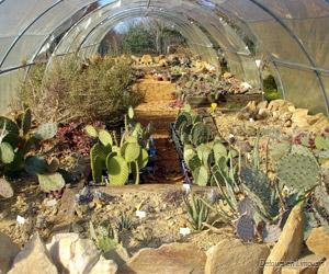 Quelques cactus du parc botanique