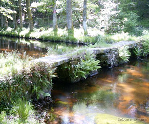 Pont planche sur la Maulde