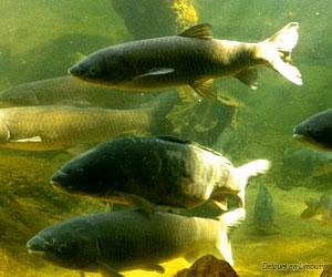 Bassins de l'aquarium du Bugue