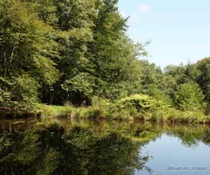Forêt des Loges